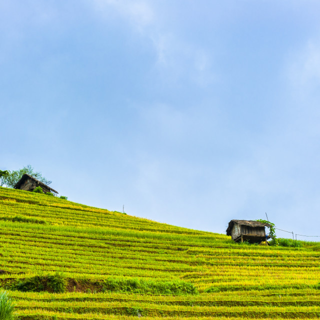 """Hill of rice terraced fields and stilt house"" stock image"