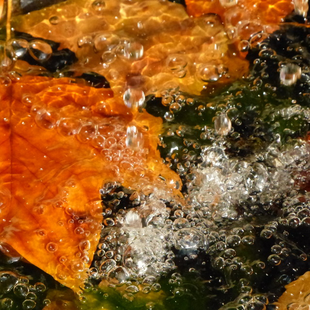 """""""Water droplets on autumn leaves"""" stock image"""
