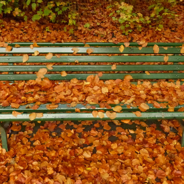"""Leafy bench"" stock image"