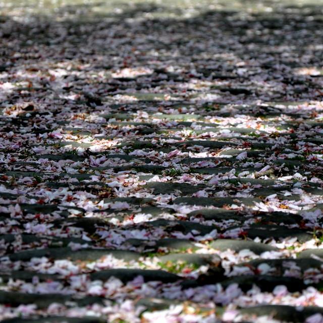 """""""Flower's carpet"""" stock image"""