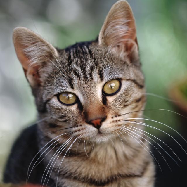 """Feline portrait."" stock image"
