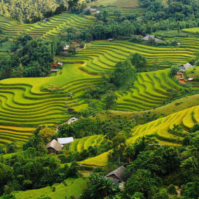 """Terraced fields"" stock image"