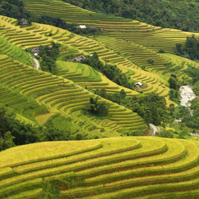 """""""Terraced fields"""" stock image"""