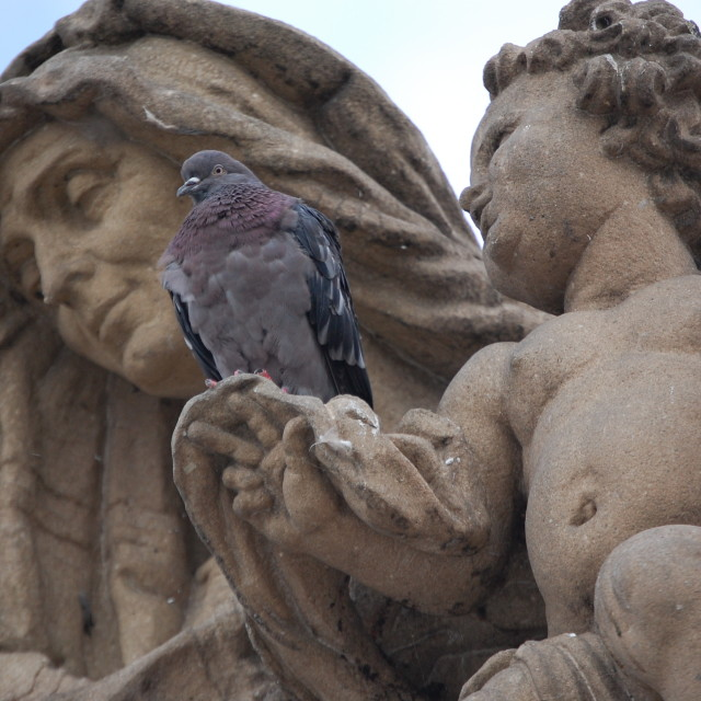 """Pigeon on Statue in Prague"" stock image"
