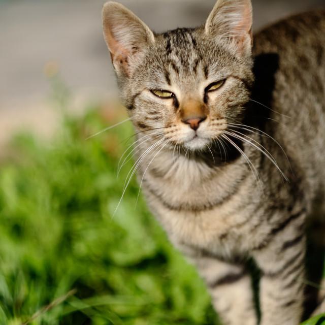 """""""Sunny grey kitten"""" stock image"""
