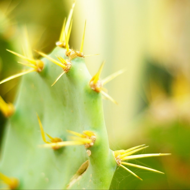 """""""Cactus with long thorns"""" stock image"""