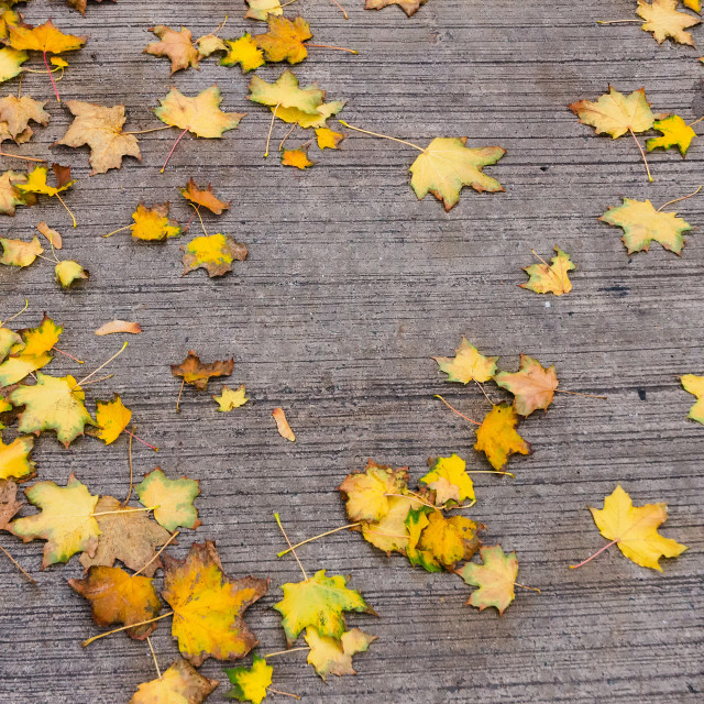 """Scattering Autumn"" stock image"