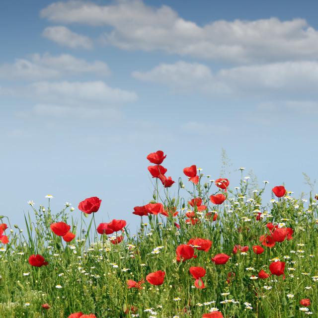 """wild flowers landscape spring season"" stock image"
