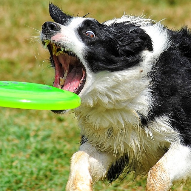 """The frisbee"" stock image"