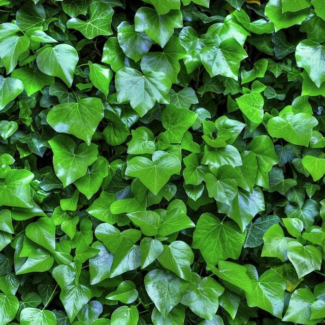 """Green Wall"" stock image"