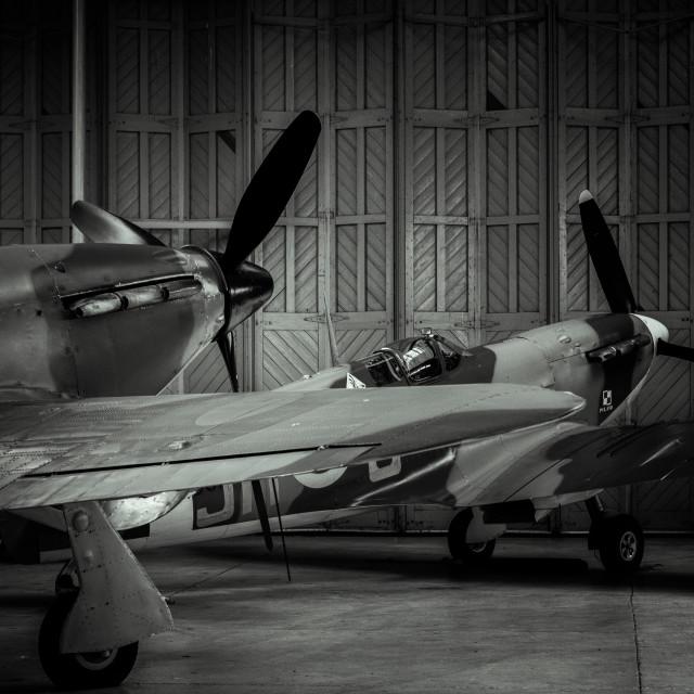 """""""Spitfires"""" stock image"""