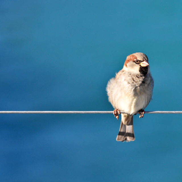 """Resting sparrow"" stock image"