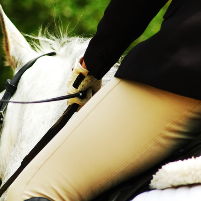 """Dressage rider"" stock image"