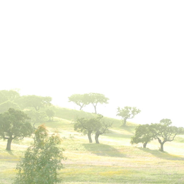 """""""Foggy Hill"""" stock image"""
