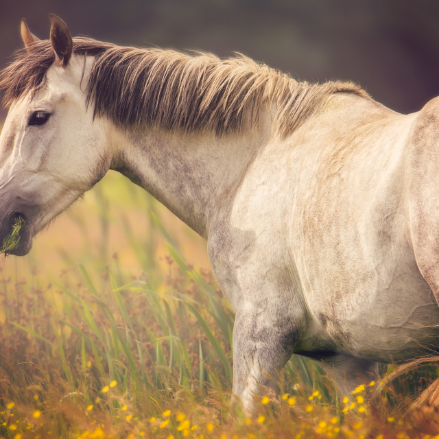 """Late Summer Horse"" stock image"