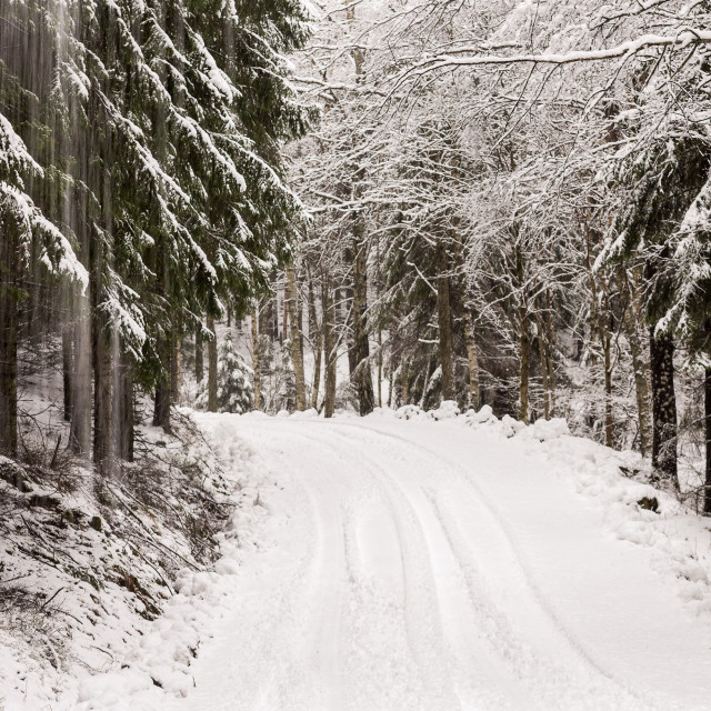 """Snowy dirt road"" stock image"
