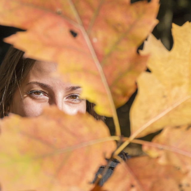 """Young woman plays with branches with autumn leaves"" stock image"