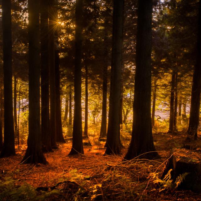 """Autumn Gold"" stock image"