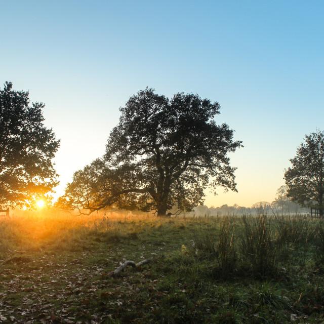 """Misty Evening Sunset"" stock image"