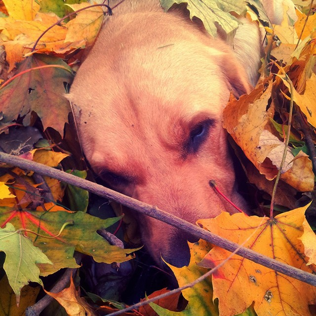 """hiding in the leaves"" stock image"