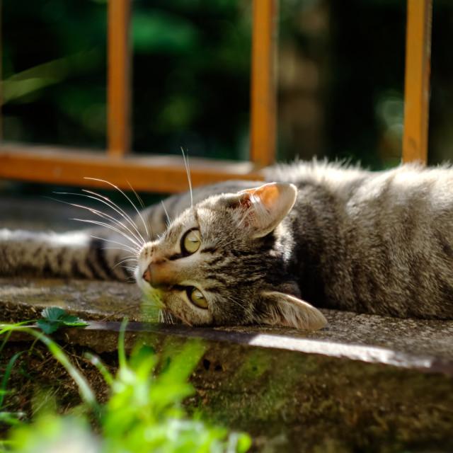 """Cat lying down"" stock image"