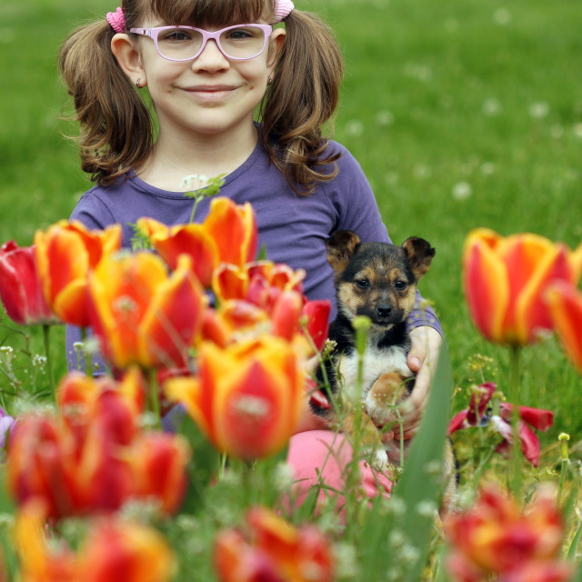 """""""little girl with puppy in the tulip flower garden"""" stock image"""