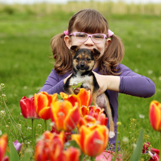 """happy little girl with puppy pet in tulip garden"" stock image"