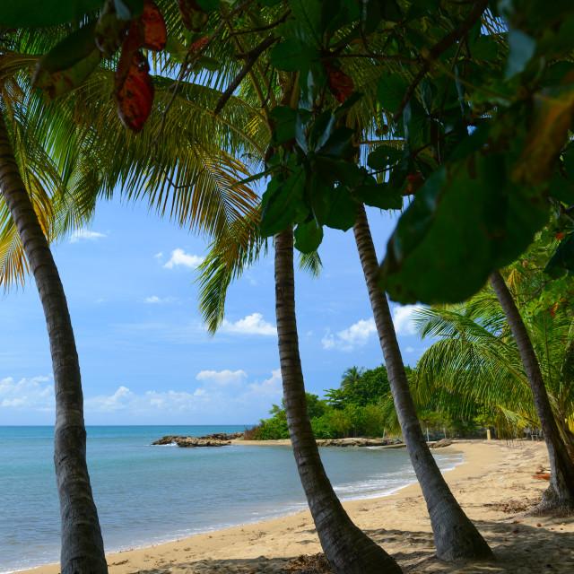 """""""Marina Beach - Rincon, Puerto Rico"""" stock image"""