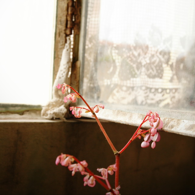 """Metal open window with flower"" stock image"