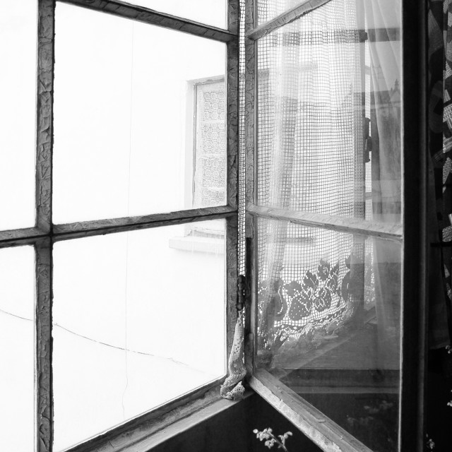 """""""BW metal abandoned window with flower"""" stock image"""