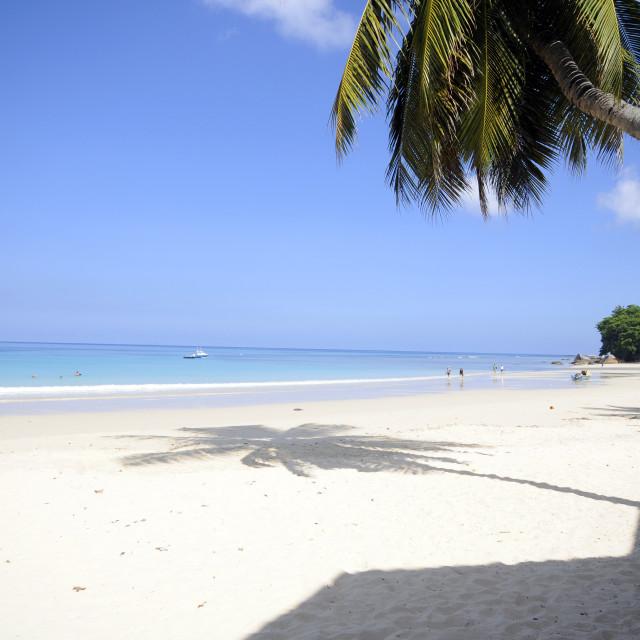 """Tropical beach"" stock image"