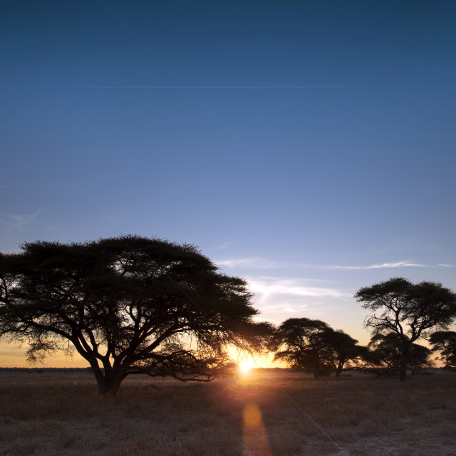 """African Savanna"" stock image"