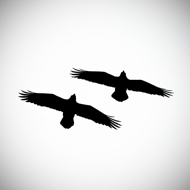 """Silhouette of two ravens"" stock image"