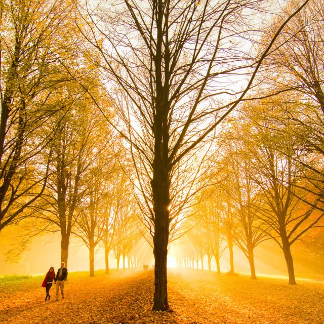 """An autumn walk"" stock image"