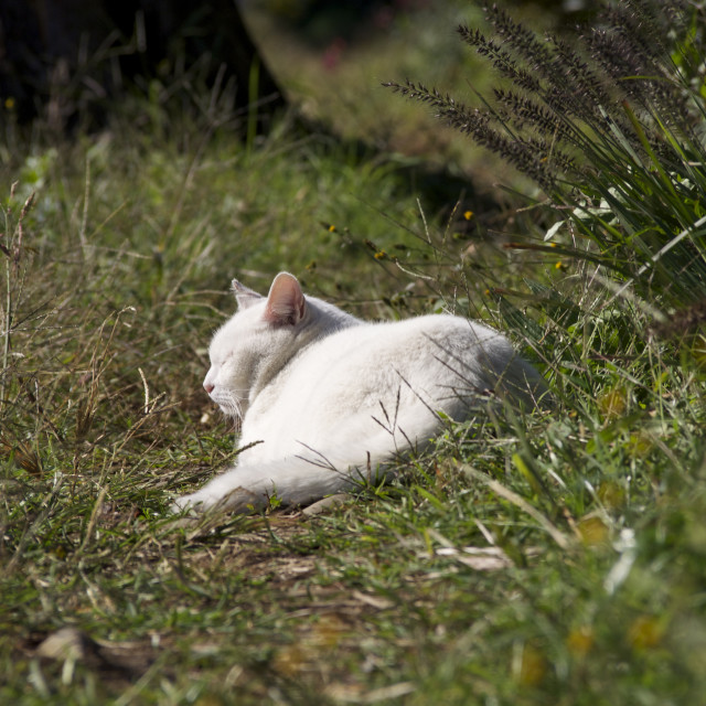 """Cats have a sunbathing"" stock image"
