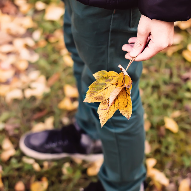"""Leaves in children hand"" stock image"