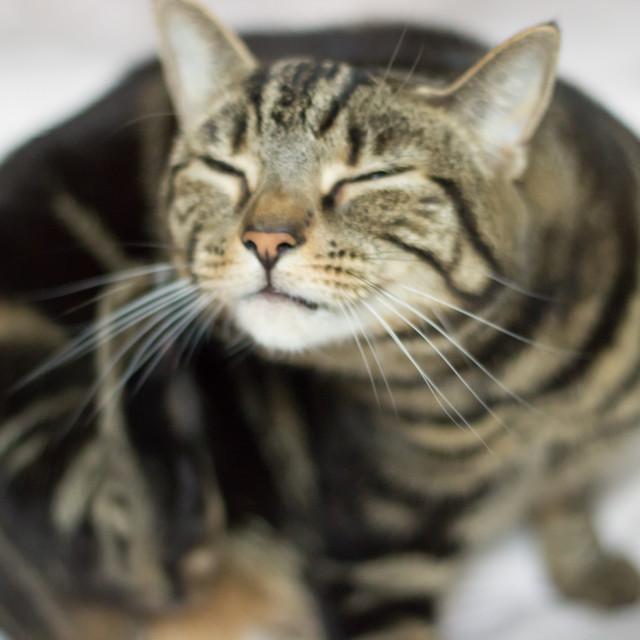 """Cat Scratch"" stock image"