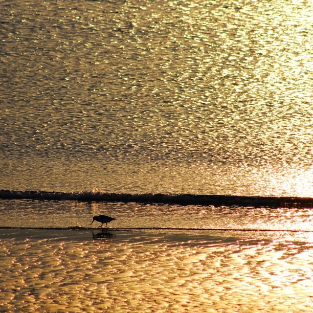 """""""Wader at Sunset"""" stock image"""