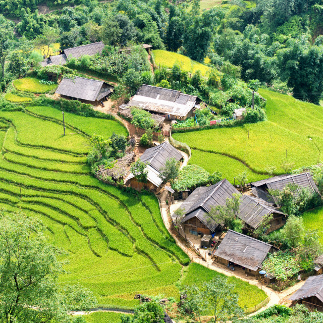 """""""rice terrace hill"""" stock image"""
