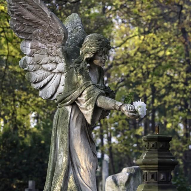 """Angel"" stock image"