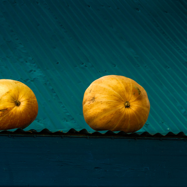"""Two pumpkins on a roof"" stock image"