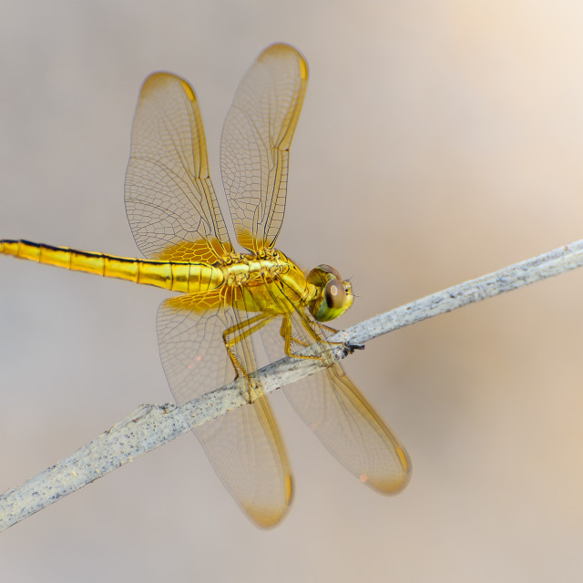 """Dragonfly 2"" stock image"