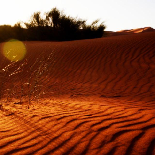 """""""Desert rules"""" stock image"""