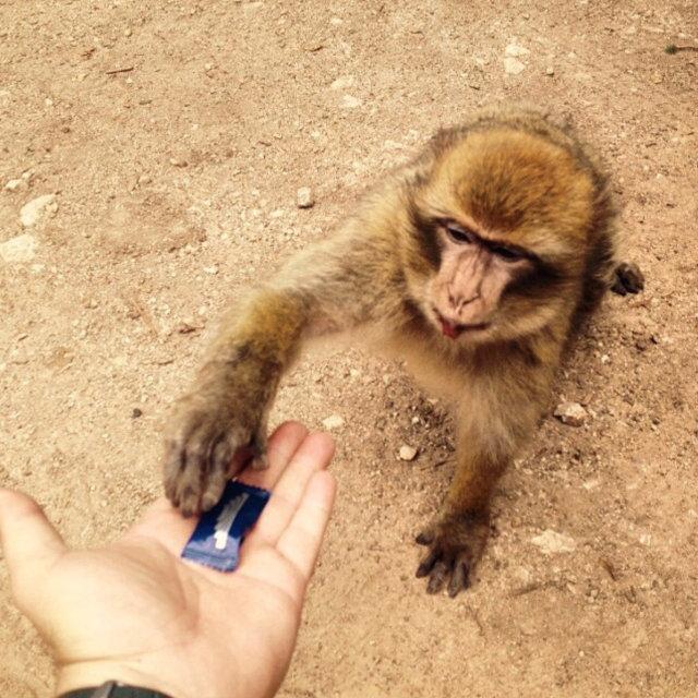 """sweet monkey"" stock image"