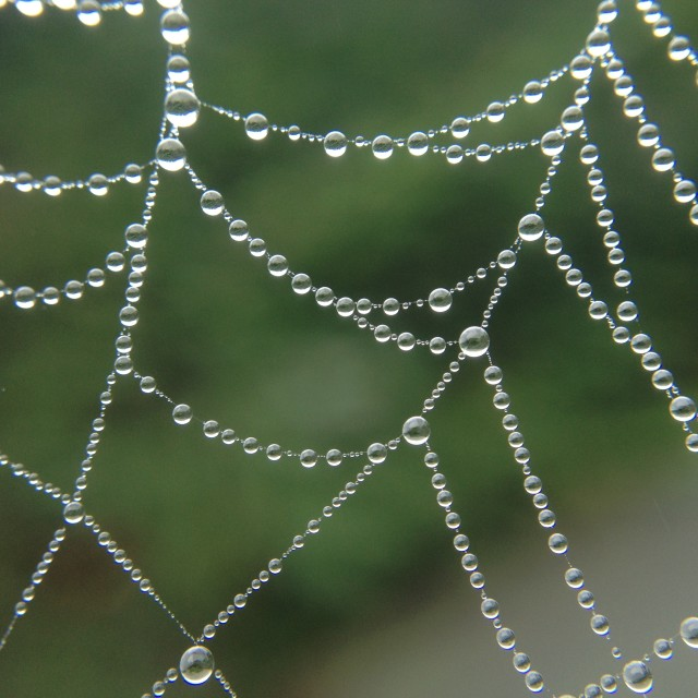 """Dew drops on a cobweb"" stock image"