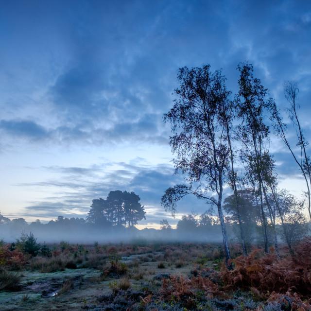"""Predawn Mist on Wisley Common"" stock image"