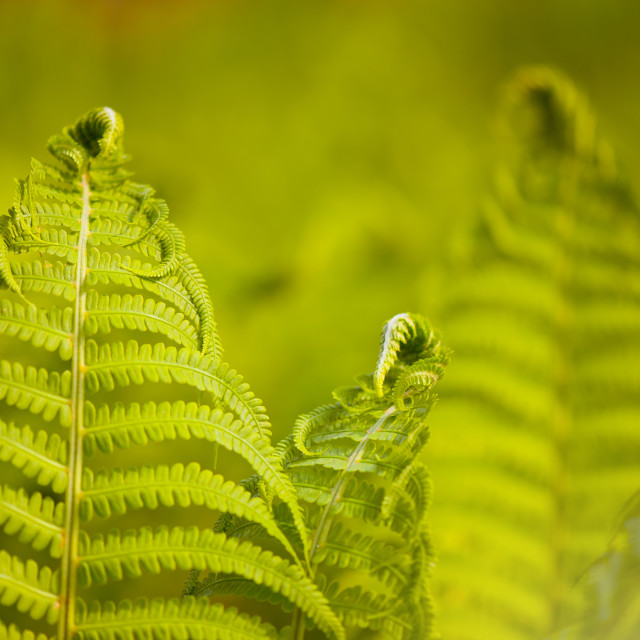 """Flourish fresh fern foliage"" stock image"