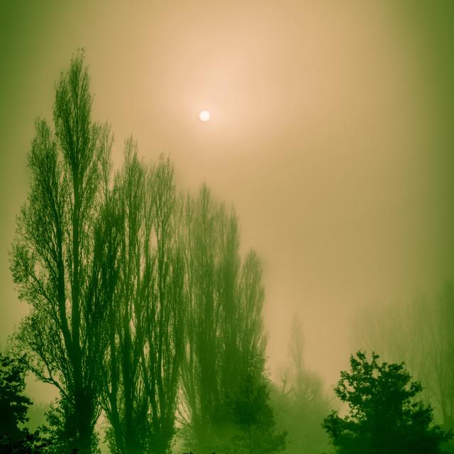 """Misty Green"" stock image"