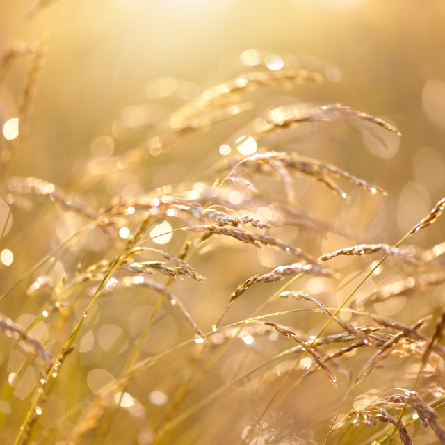 """""""Fresh meadow after the rain"""" stock image"""