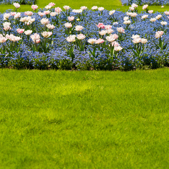 """Spring garden flowers bedding"" stock image"